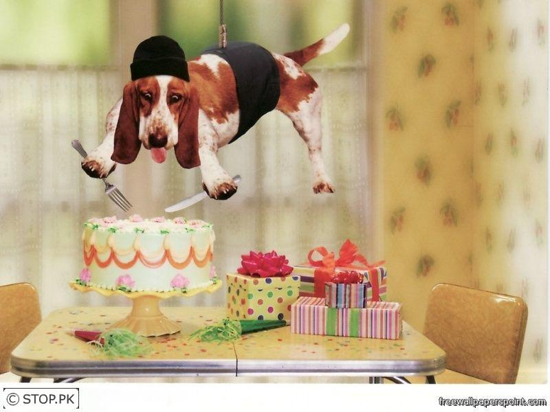 happy birthday funny dog. Tags: funny, dog, happy, irthday